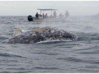 Experiencia con ballenas