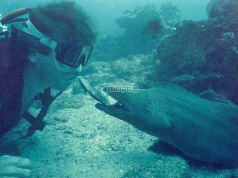 Te espera un mundo maravilloso debajo del mar