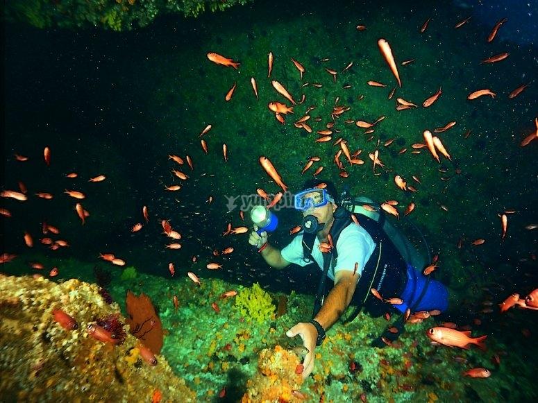 Podrás contemplar bellos paisajes submarinos