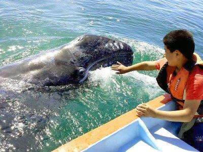 Whale Watching in Ojo de Liebre Lagoon 3 d