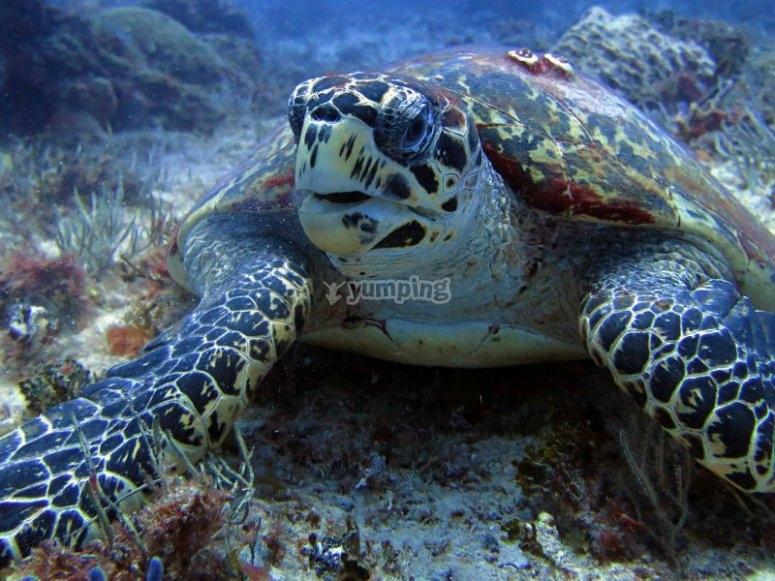 Descubriendo la vida  marina