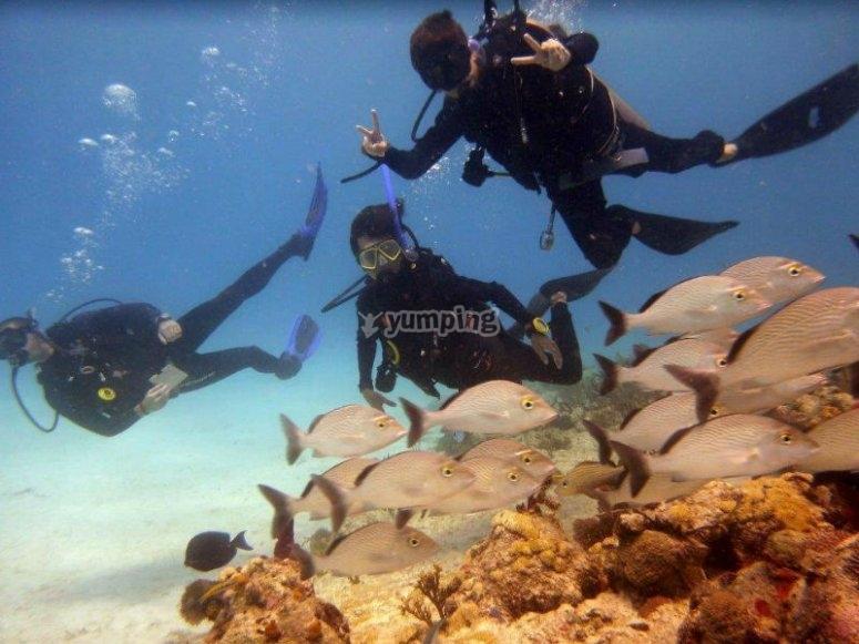 Descubre el mundo marino mientras aprendes