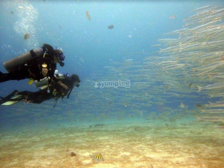 Increíbles vistas bajo el agua