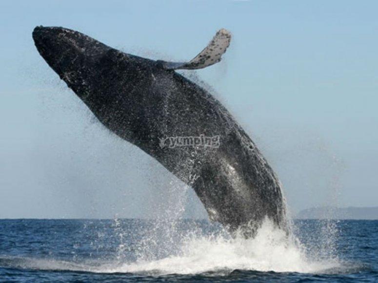 Saludando ballenas