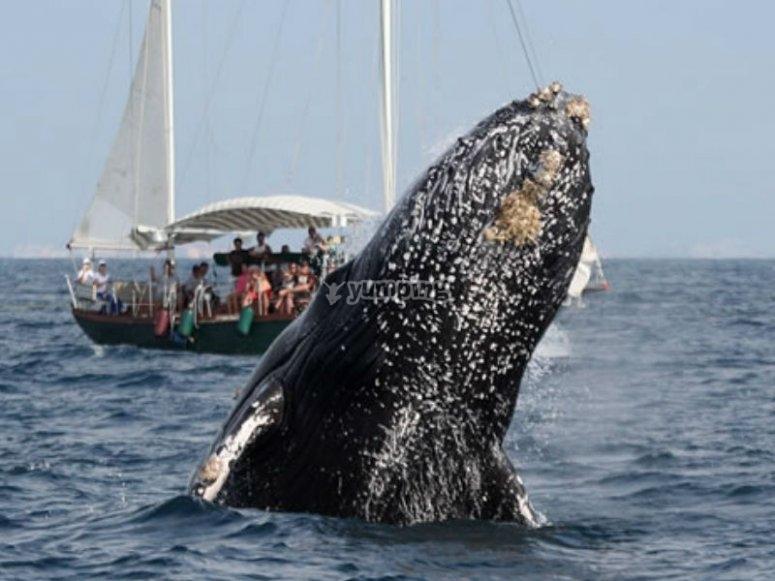 Conociendo ballenas