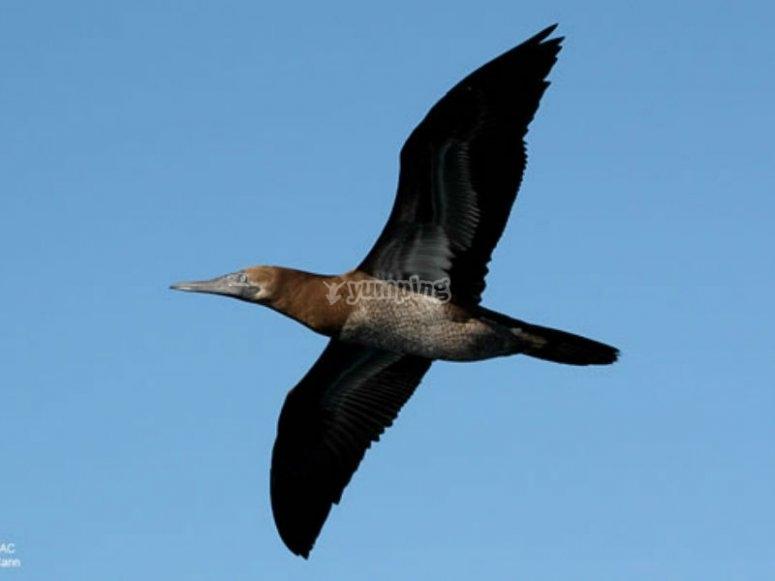 Aves sobre el mar