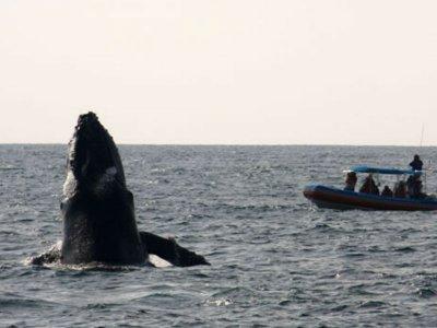 Avistamiento de ballenas en Pto Vallarta niños