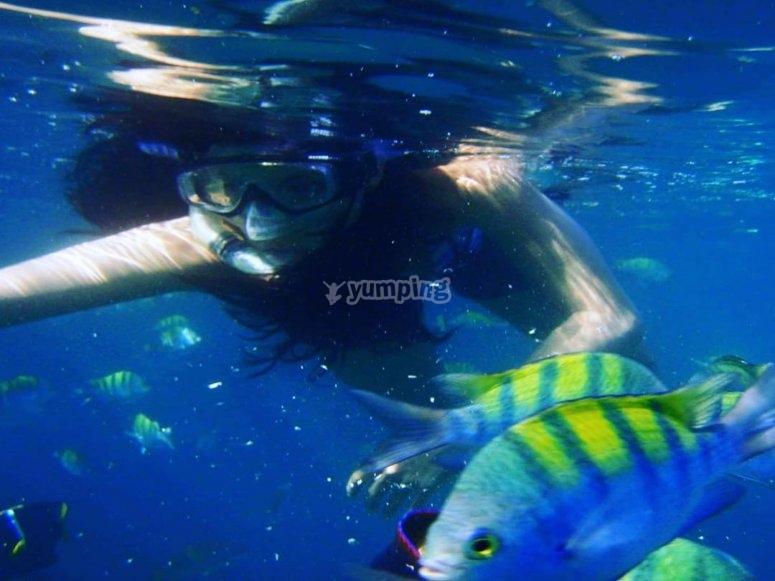 snorkel y peces