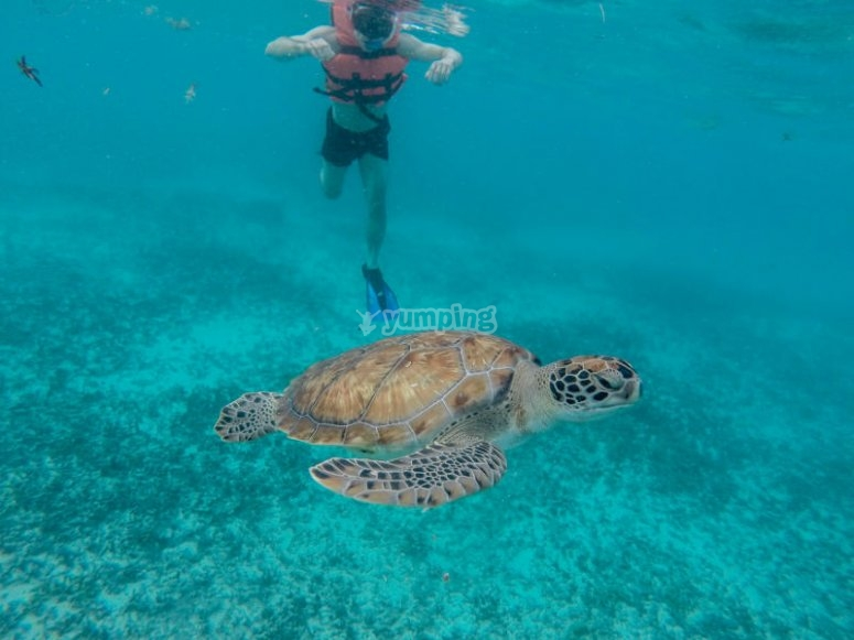 Nothing with the turtles of the Riviera Maya