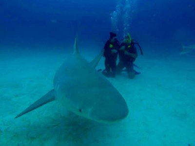 Bull Shark Diving Tour from Tulum 6 h
