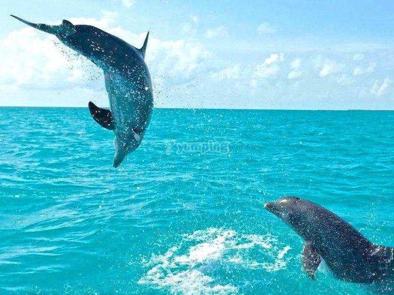 Impressive marine fauna