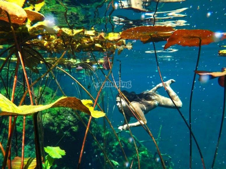 Cenotes marine life