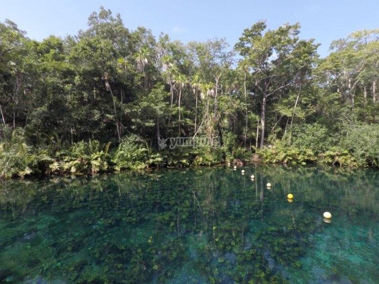 Beauty of Casa Cenote