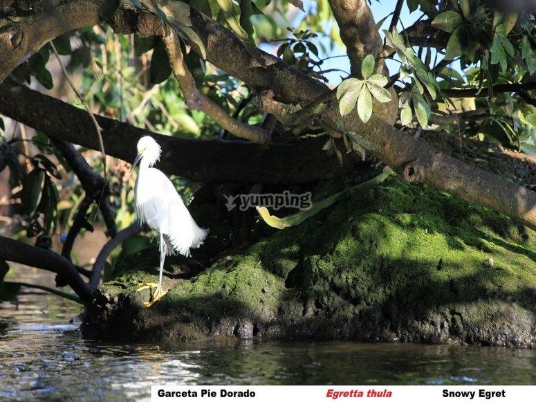 Garzas Island