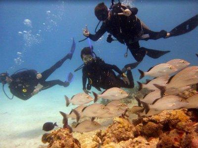 Buceo en arrecifes de Playa del Carmen 4 horas