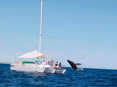 Whale encounter in Cabo San Lucas 2 hours