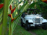 Coffee tour in 4x4 with tasting in Tapachula