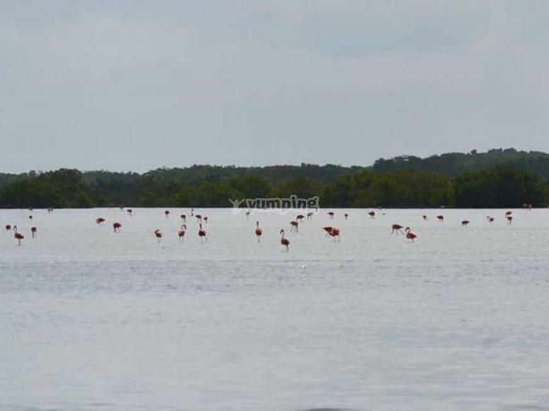 See this beautiful community of flamingos