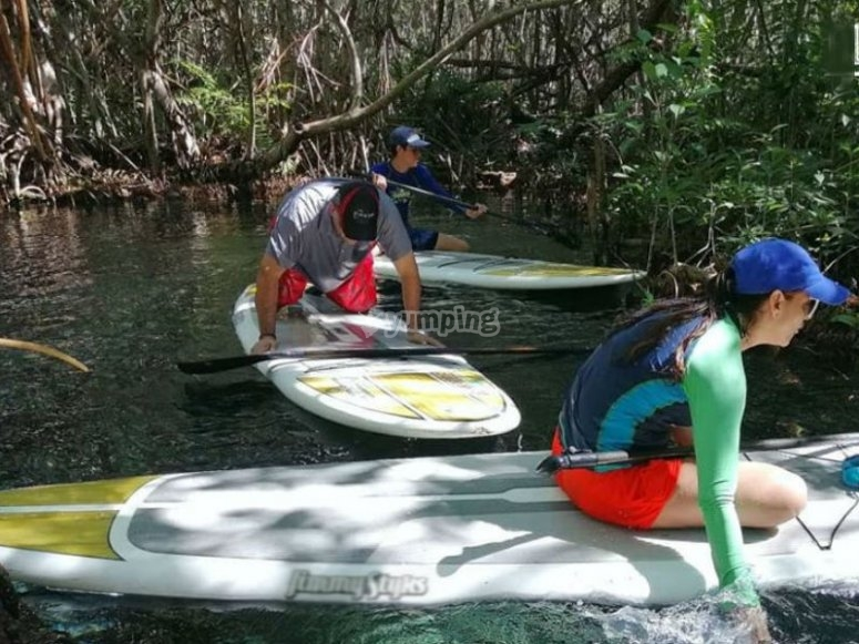 Tour on your board through the mangroves