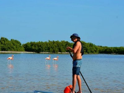 Stand Up Paddle Experience in La Carbonera 5 h