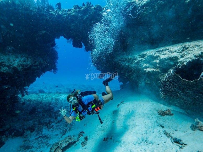 Descubre el maravilloso mundo marino del Caribe