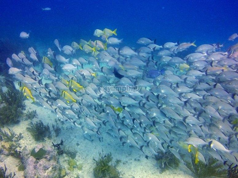 Aprende y descubre un maravilloso mundo bajo el agua