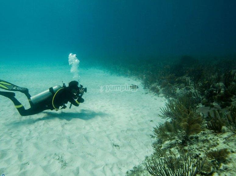 Buceando en los arrecifes de la Riviera Maya