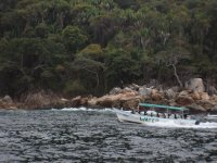 Dolphin watching tour in Tomatlán 4hrs