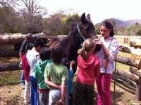 clase sobre caballos