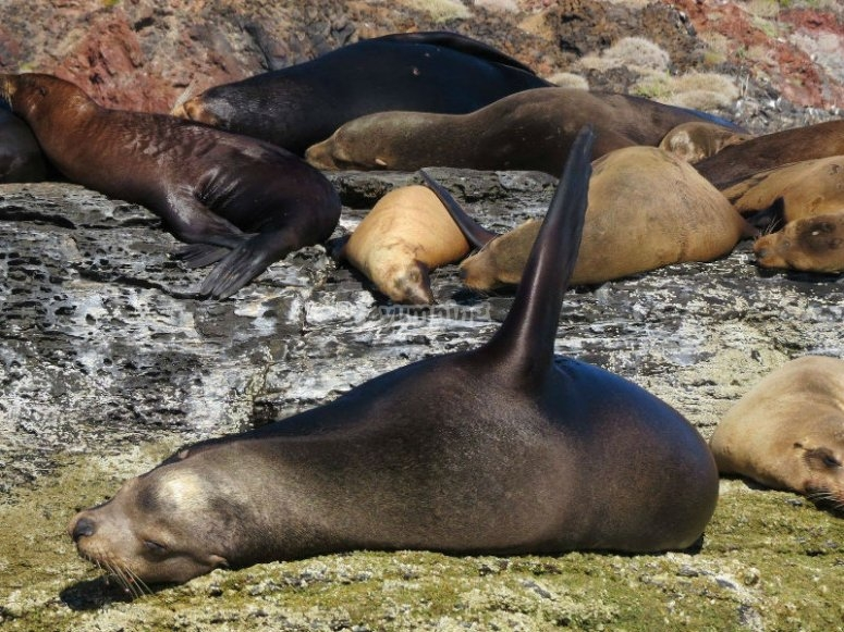See the sea lions