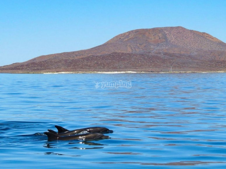 Delfines en la Bahía de Loreto