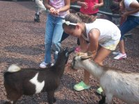 También cabras para los pequeños