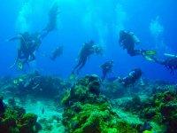 Buceo 2 tanques en Arrecife Playa del Carmen 3 hr