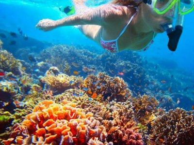 Snorkel y visita a la playa en Los Cabos 3.5 horas