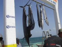 Resultados de la pesca
