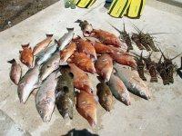 Resultados de pesca