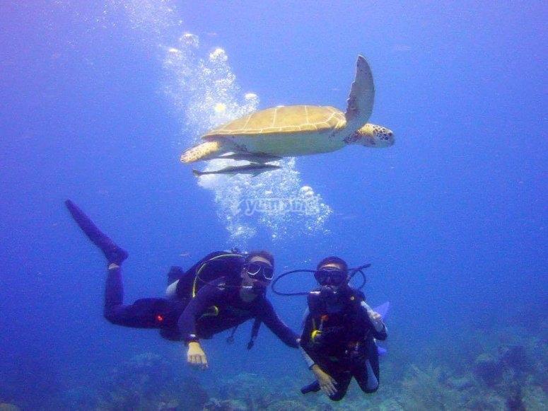 Aprende mientras admiras la vida marina del Caribe