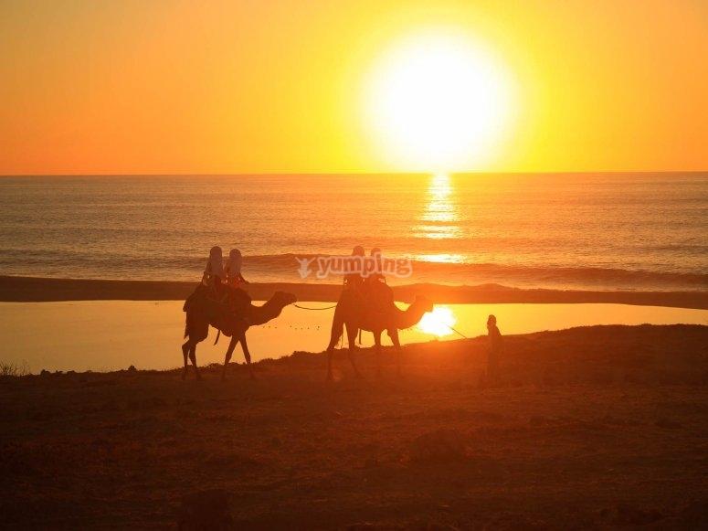 Disfruta del increíble atardecer desde un Camello