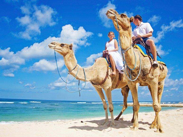 Recorre los cabos en un Camello