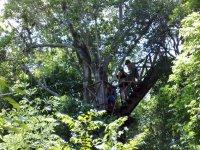 Aventura de canopy