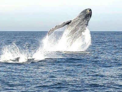 Whale watching in Mazatlán with snacks 4h