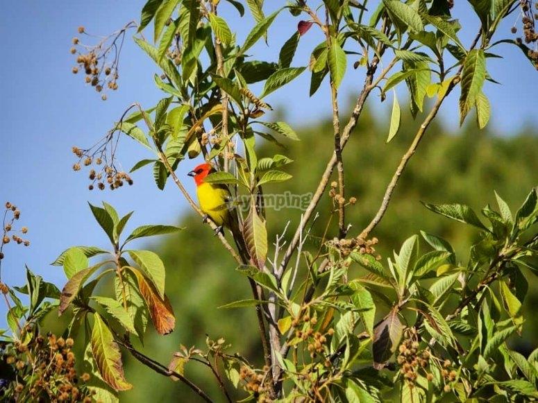 Beautiful local birds