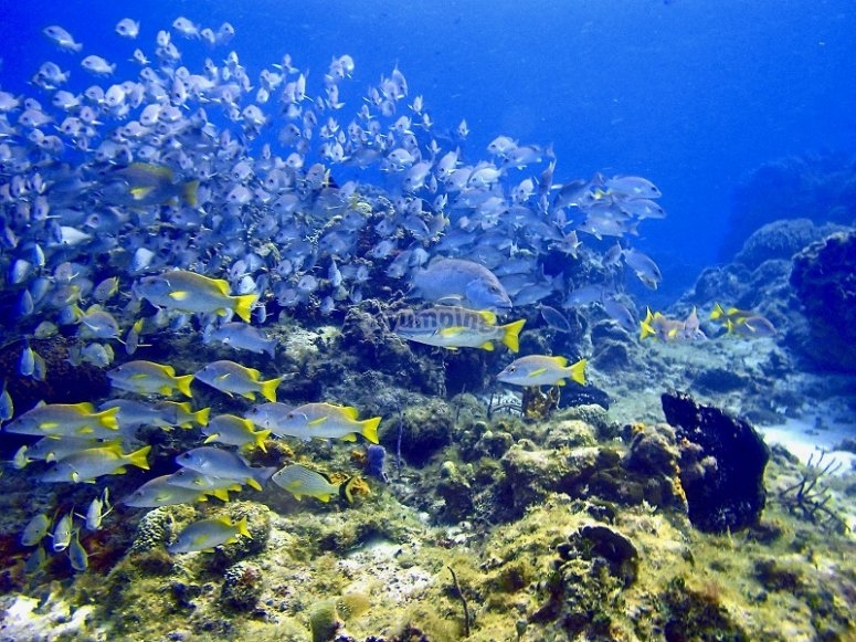 Shoals of fish full of color