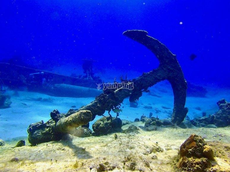 Surprises under the sea