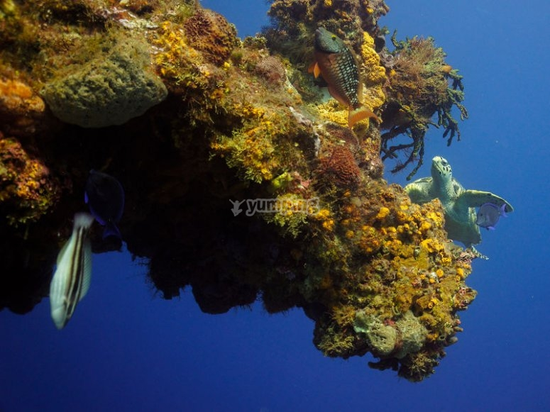 Turtle near reef