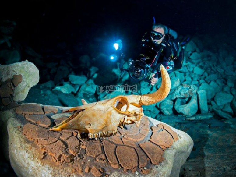 Discover the underwater world at night