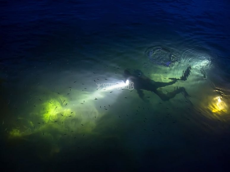 Live this different experience diving at night