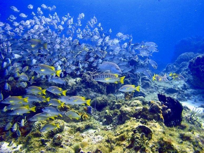 Banks of colorful fish