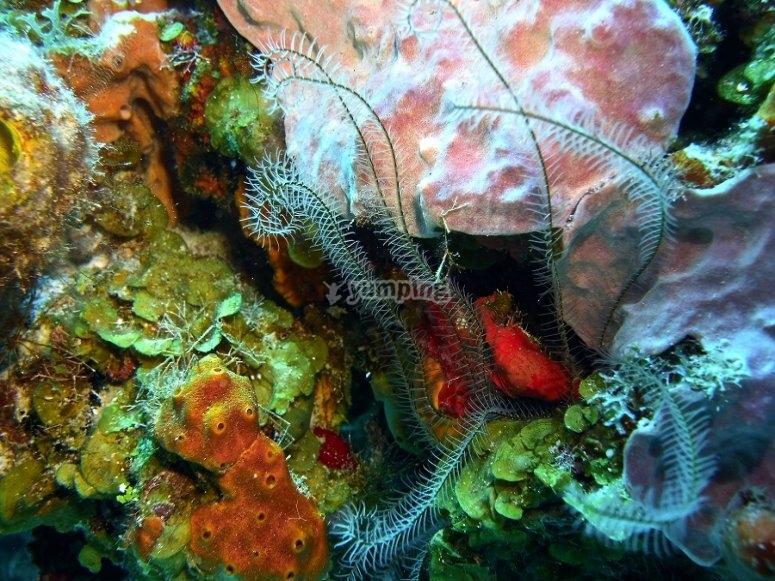 Infinity of colors underwater