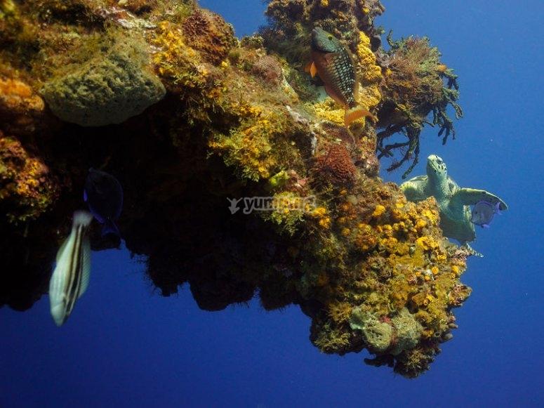 Turtle near the reef